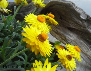waitingflowers
