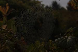 GLweb1dark
