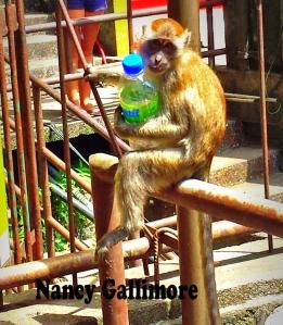nancys monkey