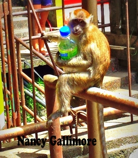 nancys monkey