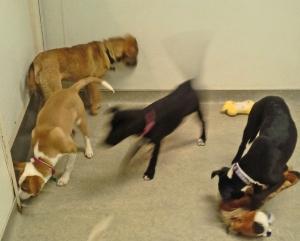 playroomdogs2