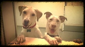 playroomdogs4
