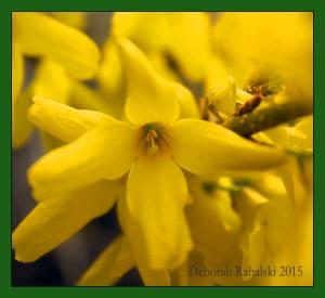 YellowEdit