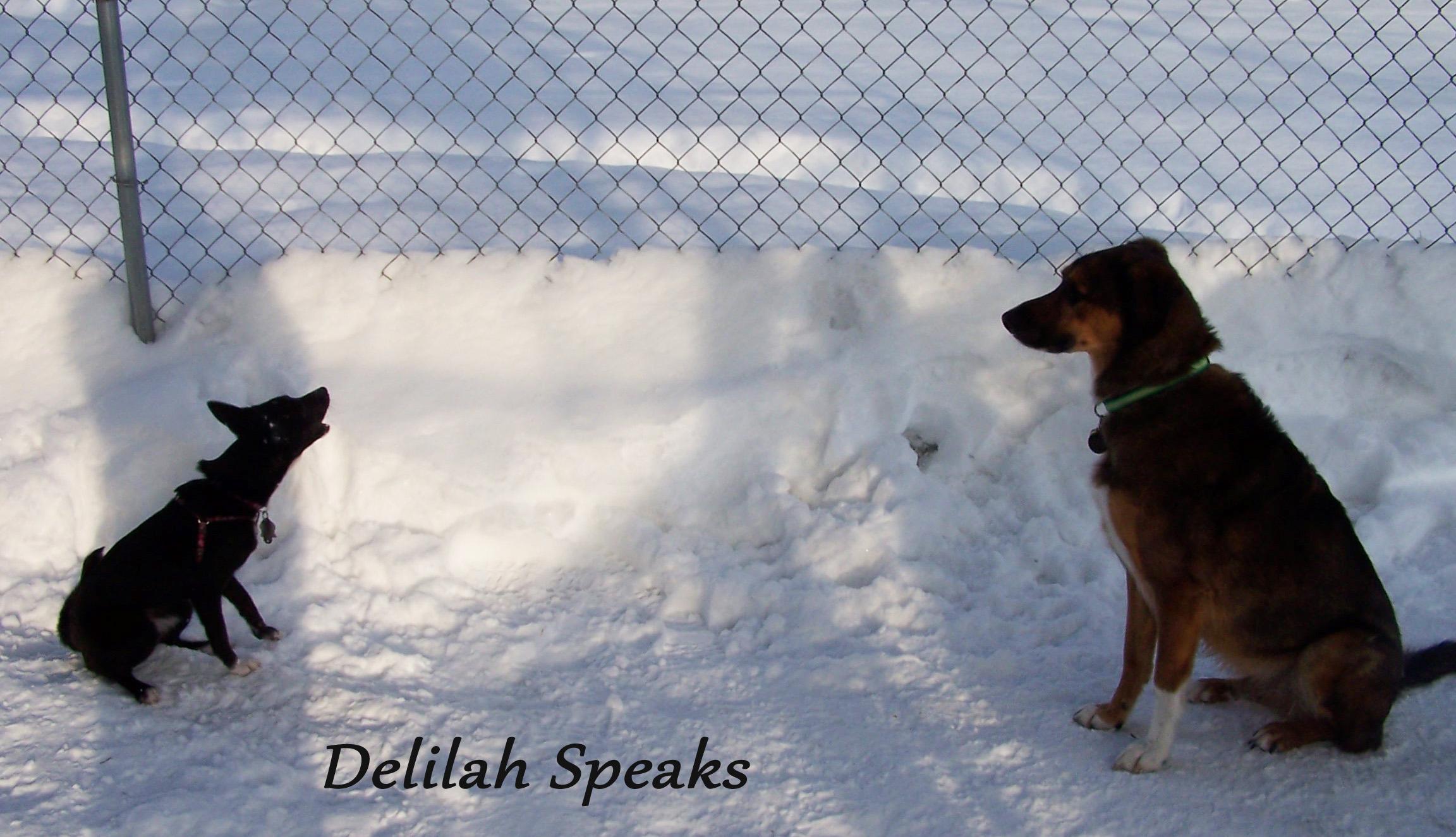 delilah speaks