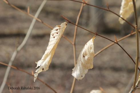 leafbonesEdit
