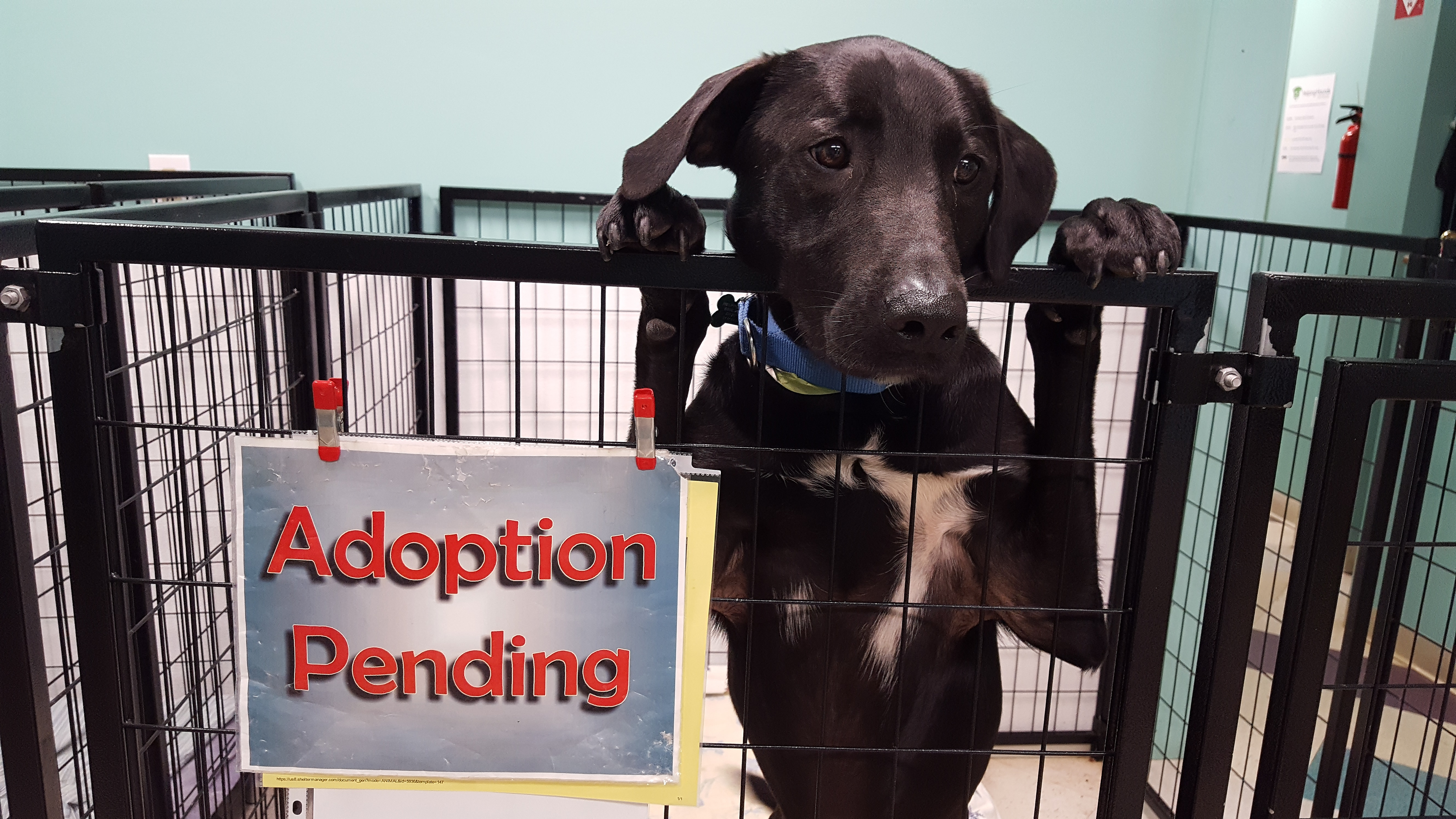 adoptionpending.jpg